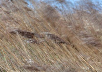 vrij-fotografie-werk-noteboom-8